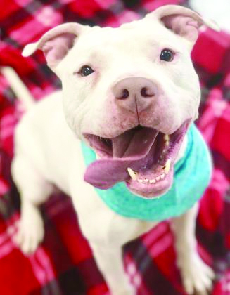 max the smiling dog looking for a forever home